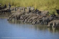 Private Kruger Safaris