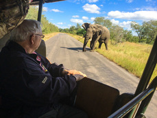 Day tours to Kruger National Park from Hazyview