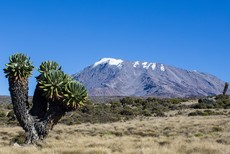 Kilimanjaro Trekking Rongai route 6 days