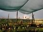 Plantlove Nursery