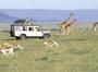7 Days Masai Mara,Lake Nakuru,Naivasha Amboseli
